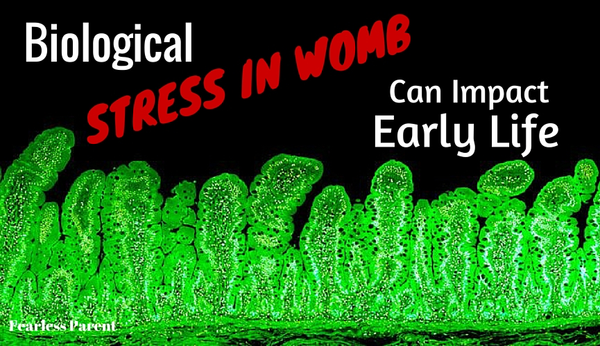 Stress in Womb