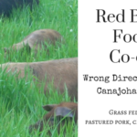 red-bank-food-coop-wrong-direction-farm_Fearless-Parent